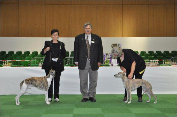 Jee Bee's Dancing Time BOB und For Pleasure Diane Keaton BOS For Pleasure Diane Keaton erhielt in der Zwischenklasse v1, CAC, CACIB, BOS und Qualifikation für CRUFTS 2015